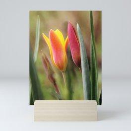 Tender slender surprise Mini Art Print