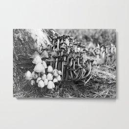 Shaggy Ink Cap Mushrooms 9 Metal Print