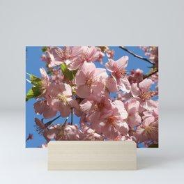 Pink Cherry Blossoms Mini Art Print