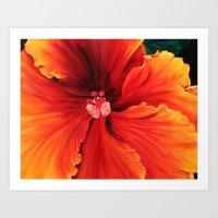 Hibiscus by Melinda Cummings Art Print