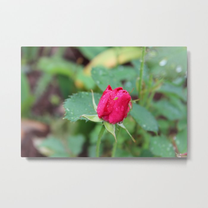 Little Green Bug on a Pink Rose Metal Print