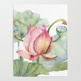 Lotus Metaphor for Feminine Beggining Poster