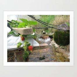 Malaysia - Cameroon Highland Strawberry Farm Art Print