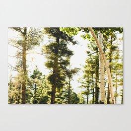 Forest Wonderland IV Canvas Print