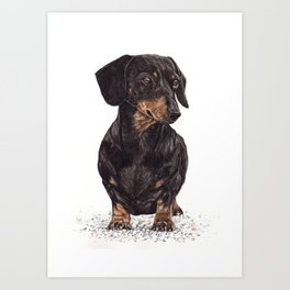Dog-Dachshund Art Print