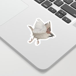 House Sparrow Sticker