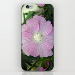 Pink Musk Mallow iPhone Skin