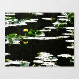 Swimming Solitude Canvas Print