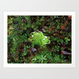 Lichen Light Art Print