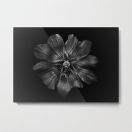 Backyard Flowers In Black And White 22 Metal Print
