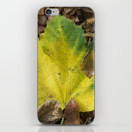Maple Contrast iPhone Skin