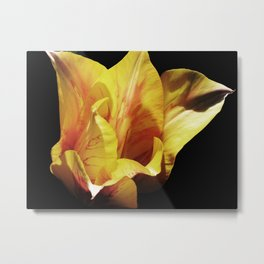 Single Yellow Tulip Metal Print