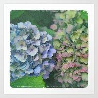 hydrangea Art Prints featuring hydrangea by EnglishRose23