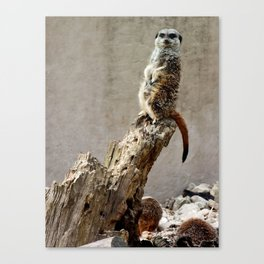 Meerkat Guard Canvas Print