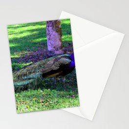 Peacock at Kingsley Plantation Stationery Cards