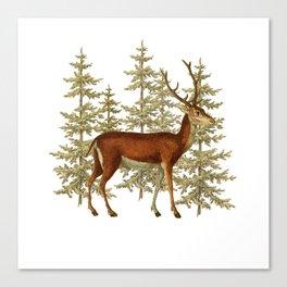 Wandering deer  Canvas Print