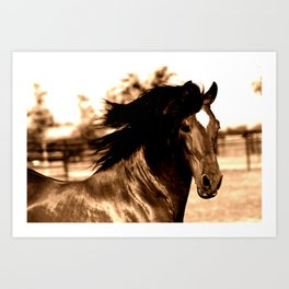 Horse print horse photography equestrian art sepia Poster Art Print