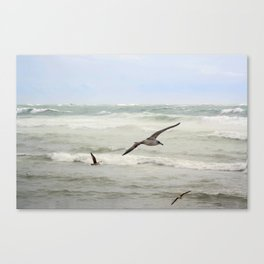 Seagulls flying over rough sea Canvas Print