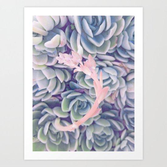 Sweet Succulents 2 Art Print