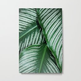Green Tropical Leaves with White Stripes Closeup Metal Print