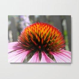 Lavender Echinacea/Coneflower Metal Print