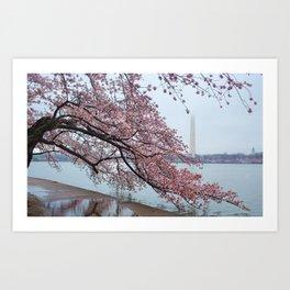 Cherry Blossum Test Art Print