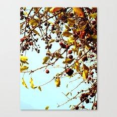 cherries in autumn Canvas Print