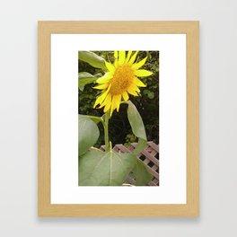 The Surviving Sunflower Framed Art Print