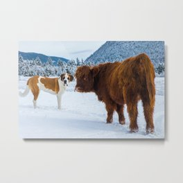 St bernard VS a Hairy cow Metal Print