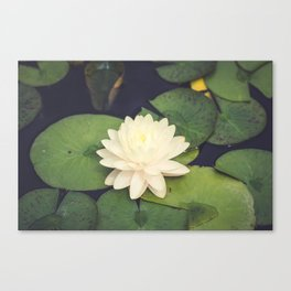 Peaceful Water Lily Canvas Print