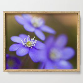 Happy Together Blue Anemones In Forest #decor #Society6 Serving Tray