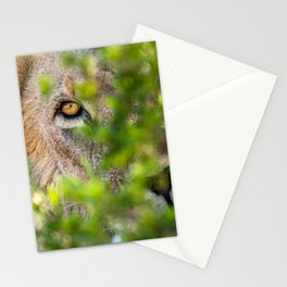 Peekaboo - A Lion Appears Stationery Cards
