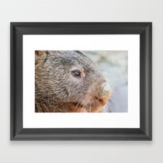 Pensive Wombat Framed Art Print