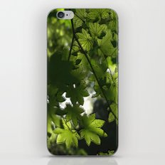 Leaf It To Me.  iPhone & iPod Skin