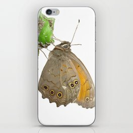 Meadow Brown Butterfly Feeding On Aphids Isolated iPhone Skin