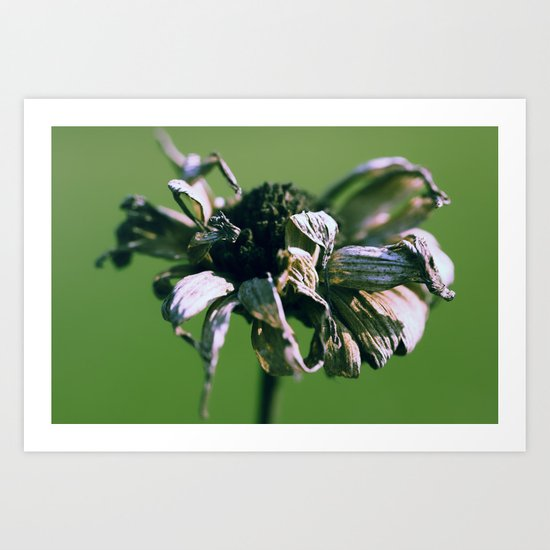 Blume o2 Art Print