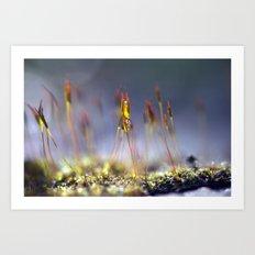 Capillary thread moss 745 Art Print