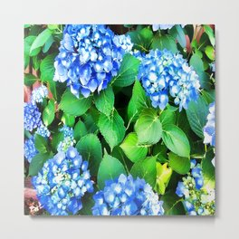 Spring In The Air - Blue Hydrangea Metal Print