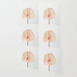 Calla Lily II Wallpaper
