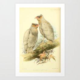 Northern Crested Caracara Art Print