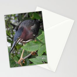 Green Heron on the Hunt Stationery Cards