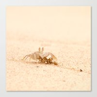 crab Canvas Prints featuring crab by Photoplace