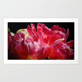 Pink Parrot Tulips close up VII Art Print
