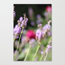 Lavender and rose Canvas Print