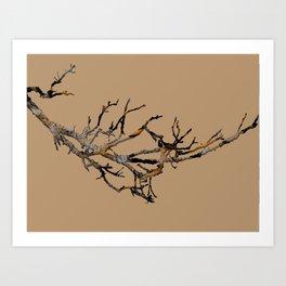 Fall Branches Art Print