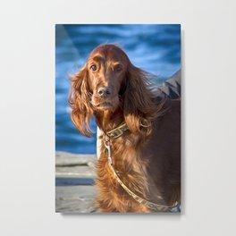 Setter dog on the pier Metal Print