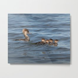 Momma and ducklings Metal Print