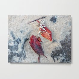 Coralline algae and dead leaf on sand Metal Print