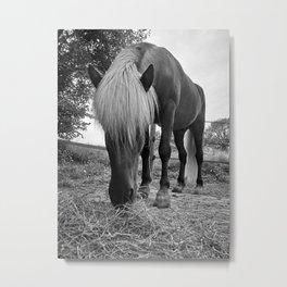 Horse Photo Metal Print