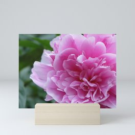 Peony with blooming prosperity Mini Art Print